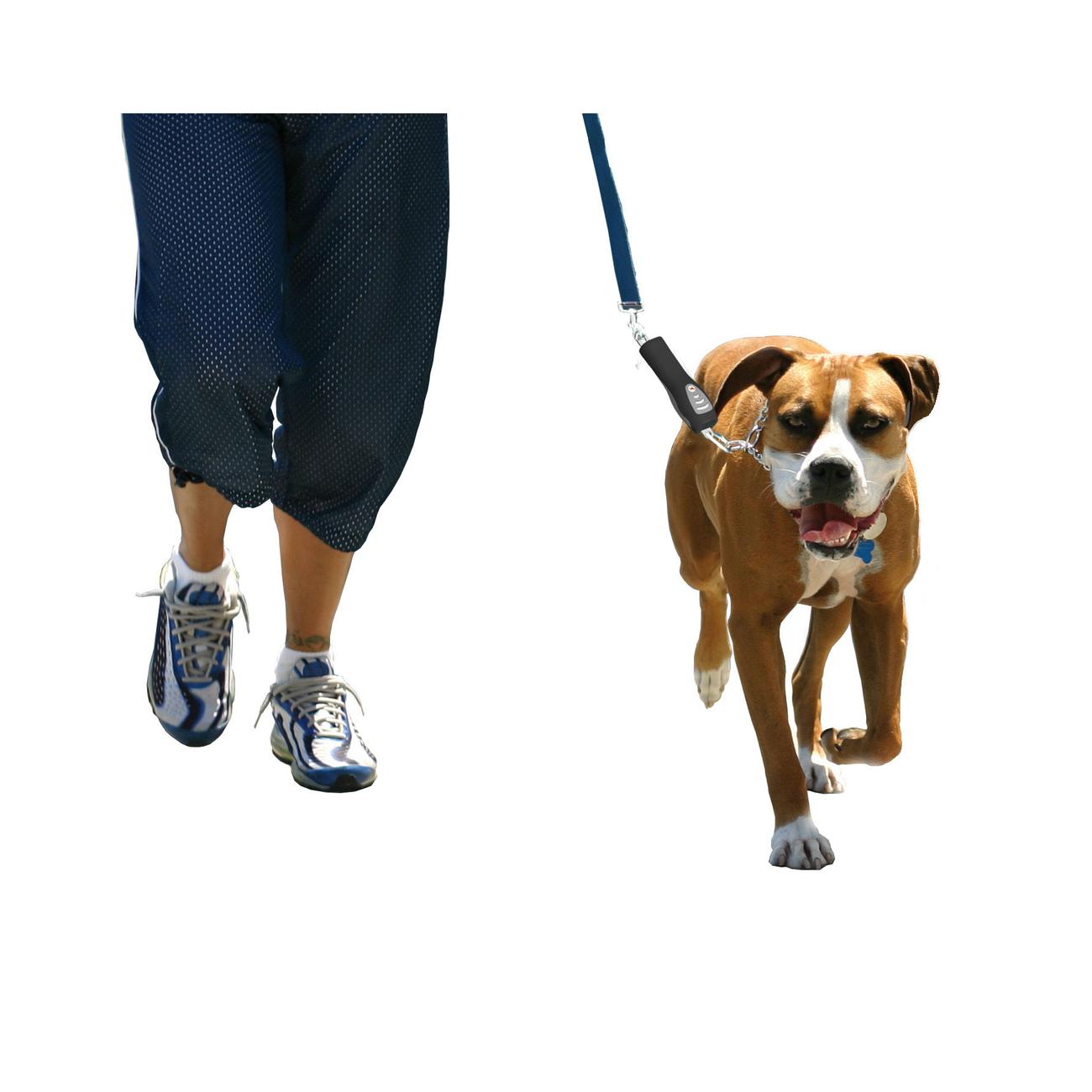 PatentoPet DOG-e-Walks Dog Trainer Basic, Bild 2