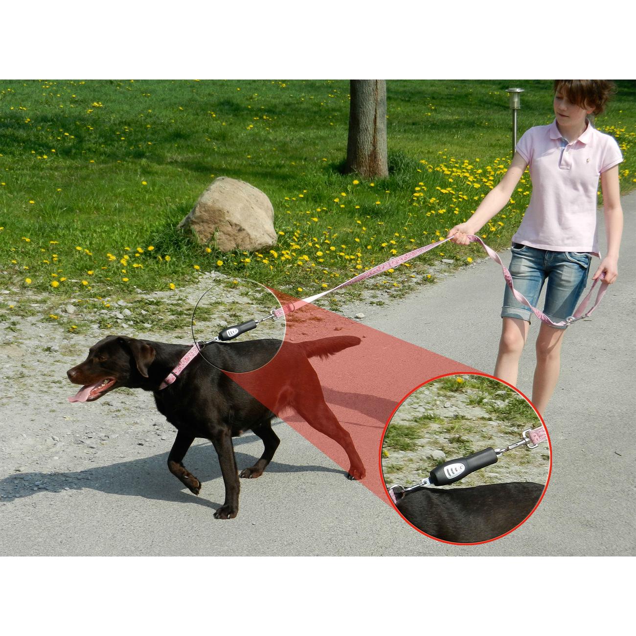 PatentoPet DOG-e-Walks Dog Trainer Basic, Bild 3