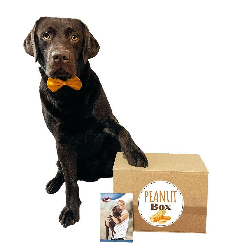 Überraschungsbox Peanut für Hunde Bild 1