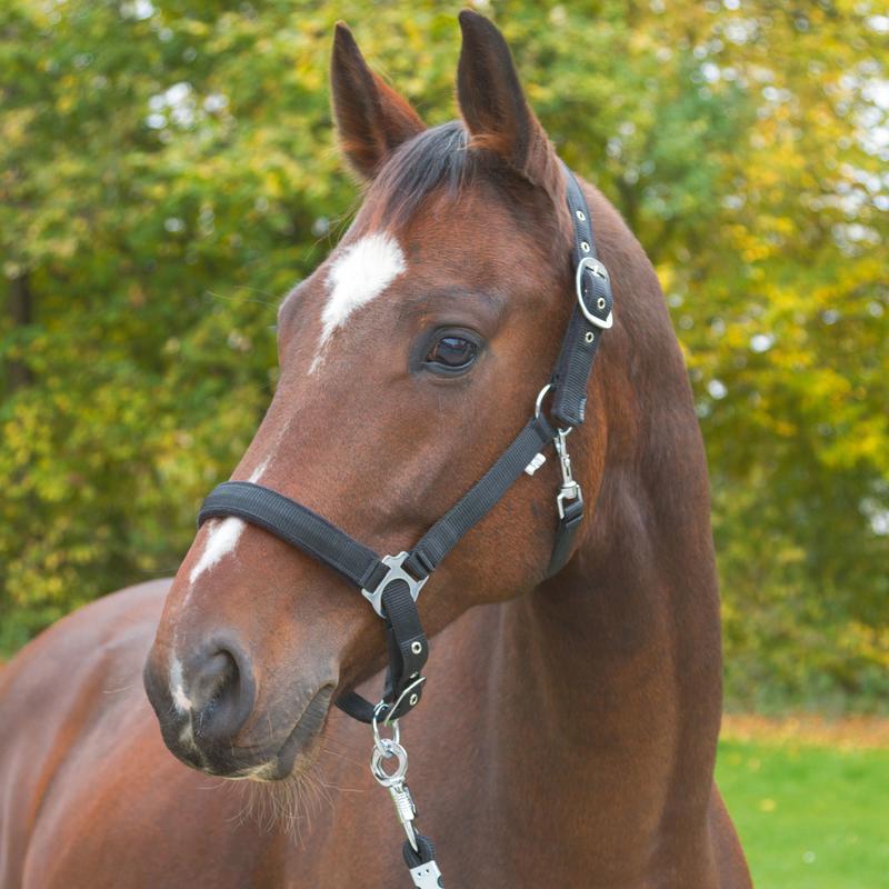 Covalliero Pferde Halfter Dexter mit Fleeceunterlage, Bild 2
