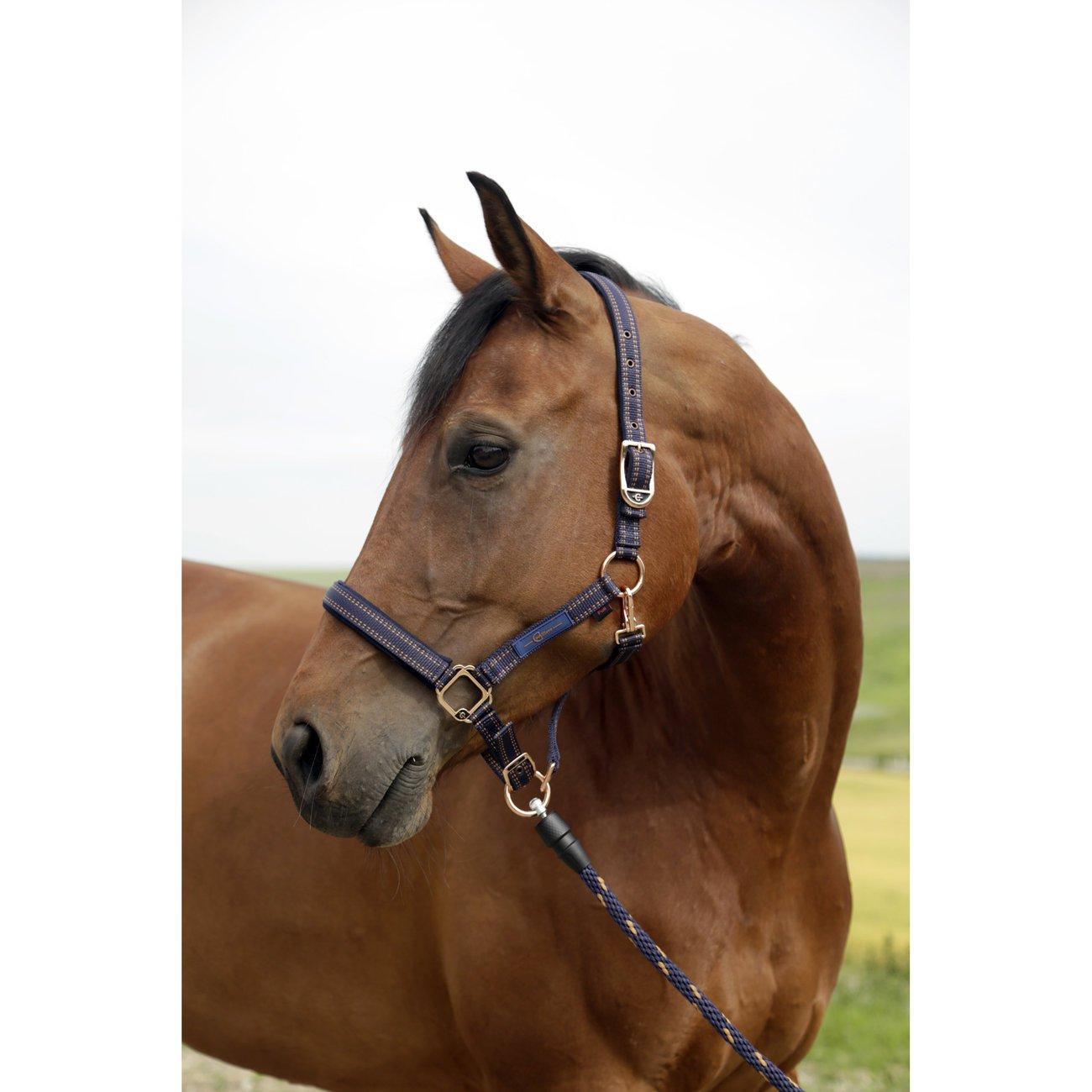 GoLeyGo Pferdehalfter für 2.0-System, Bild 4