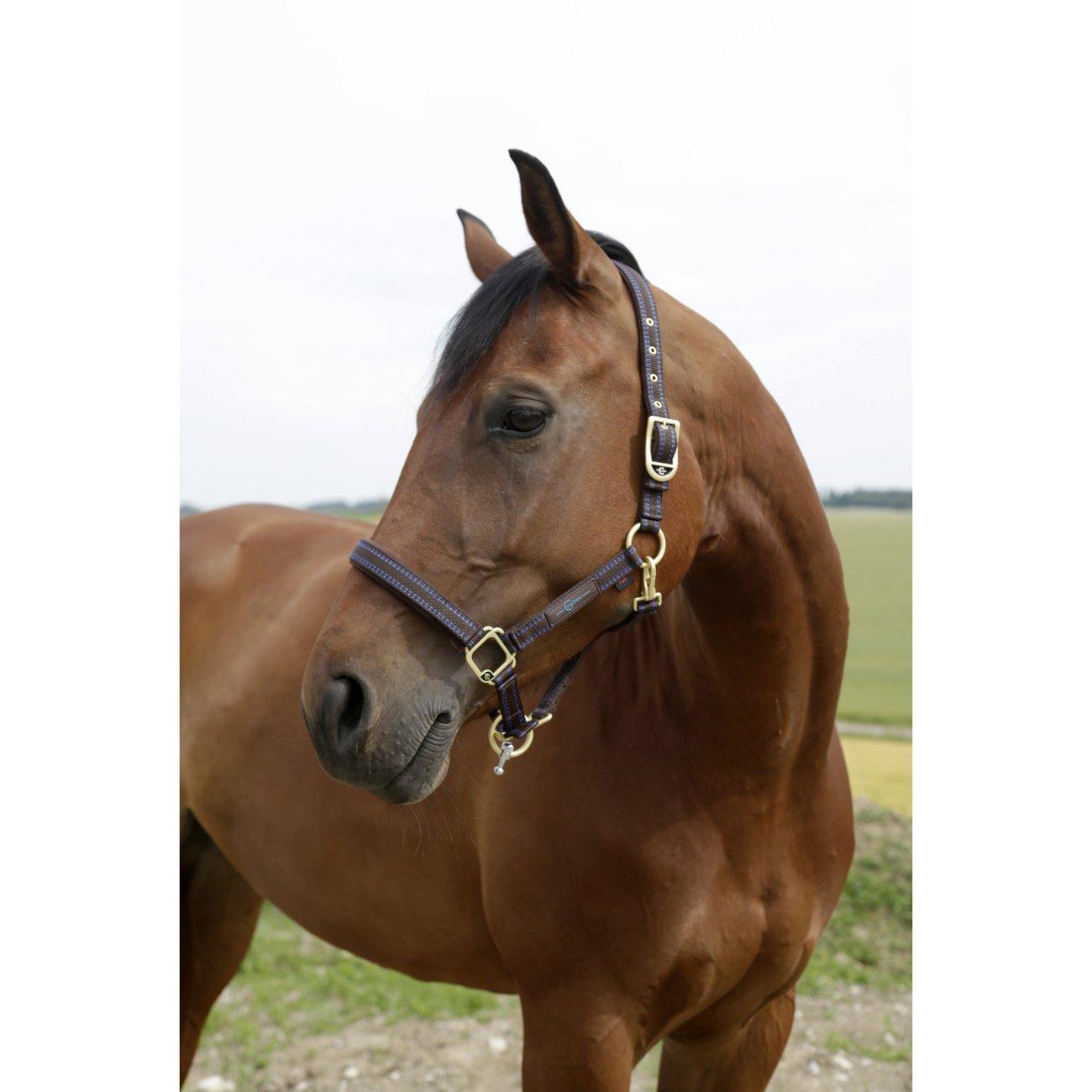 GoLeyGo Pferdehalfter für 2.0-System, Bild 6