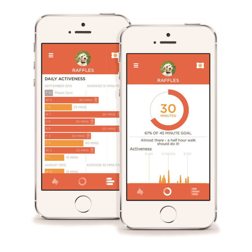 PitPat Aktivitätsmonitor für Hunde mit App, Bild 4