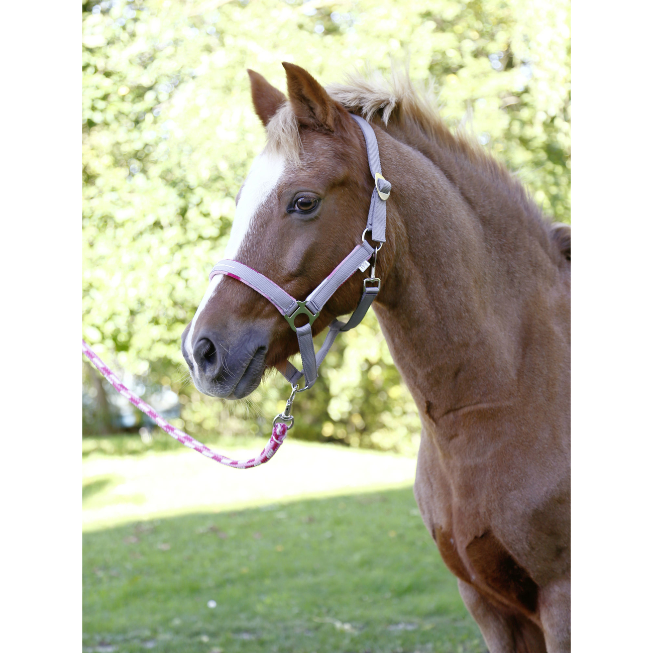 Covalliero Pony Halfter-Set Lilli mit Führstrick