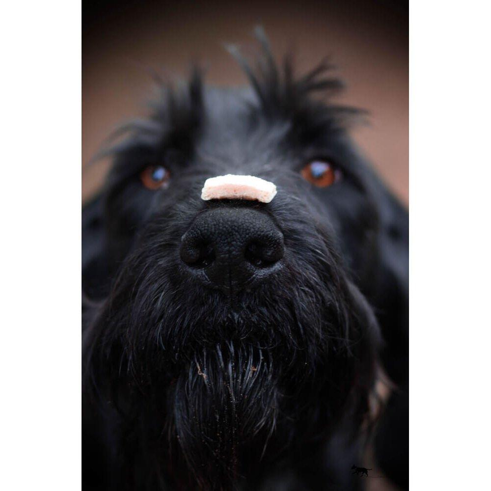 Qchefs Hunde Snack Cheesies, Bild 3