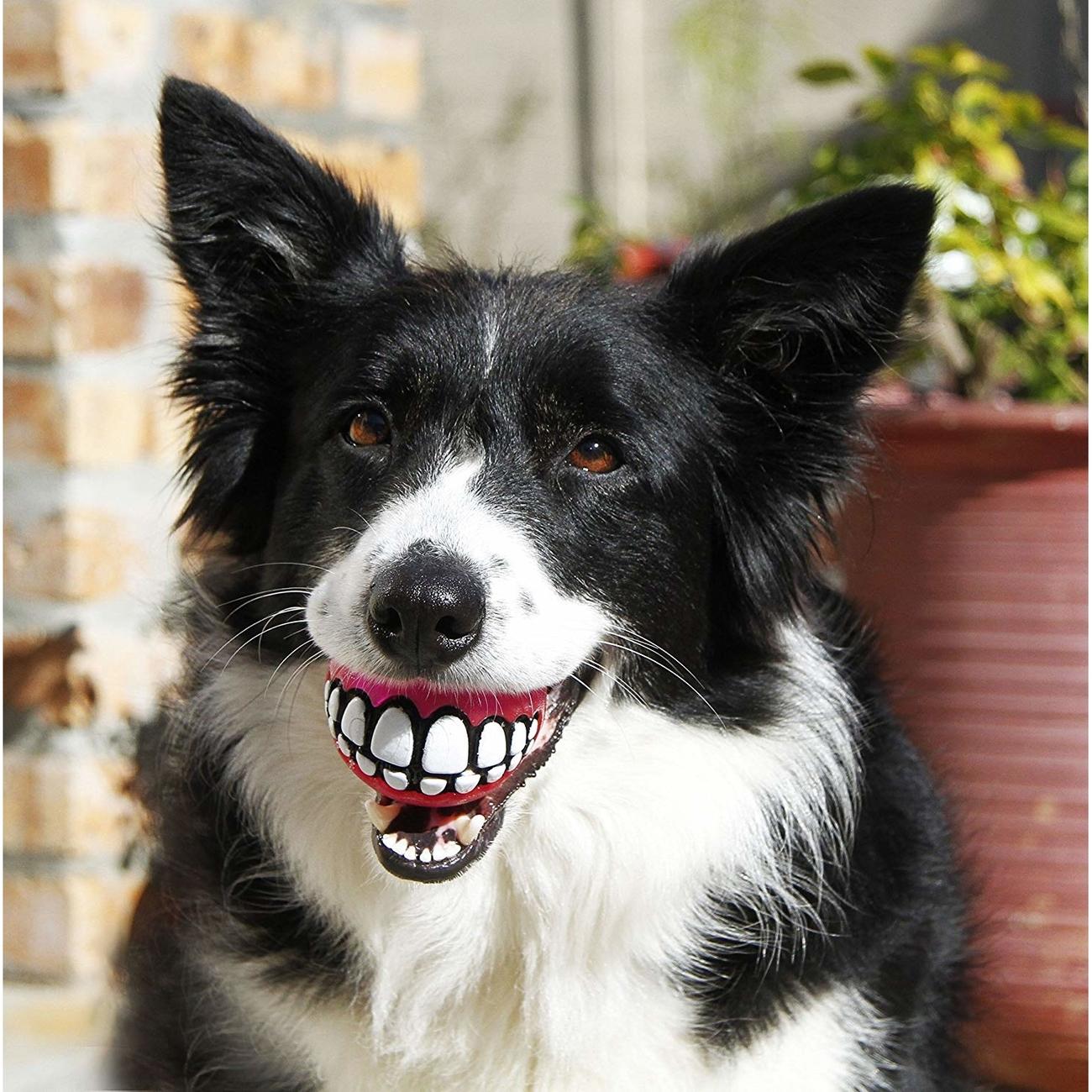 Rogz Grinz Ball für Hunde, Bild 4
