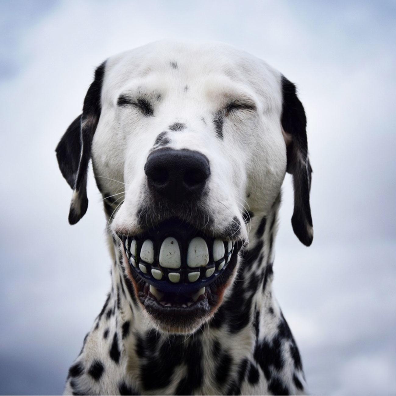 Rogz Grinz Ball für Hunde, Bild 2