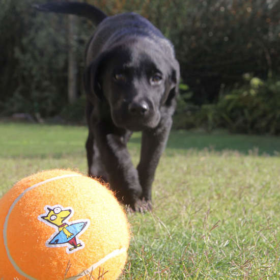 Rogz Molecules Tennisball für Hunde, Bild 7