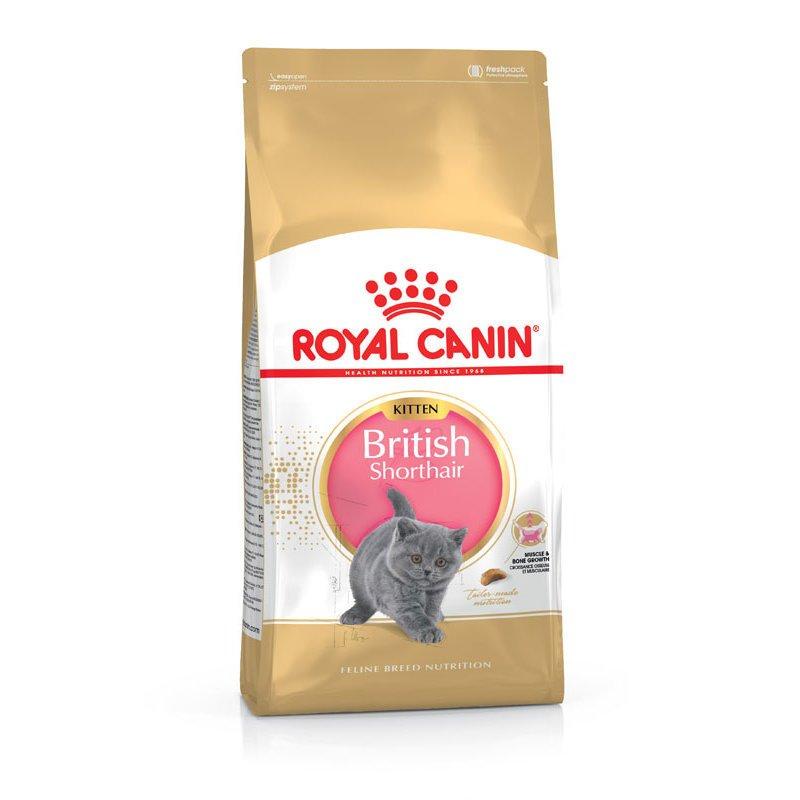 Royal Canin British Shorthair Kitten, 10 kg