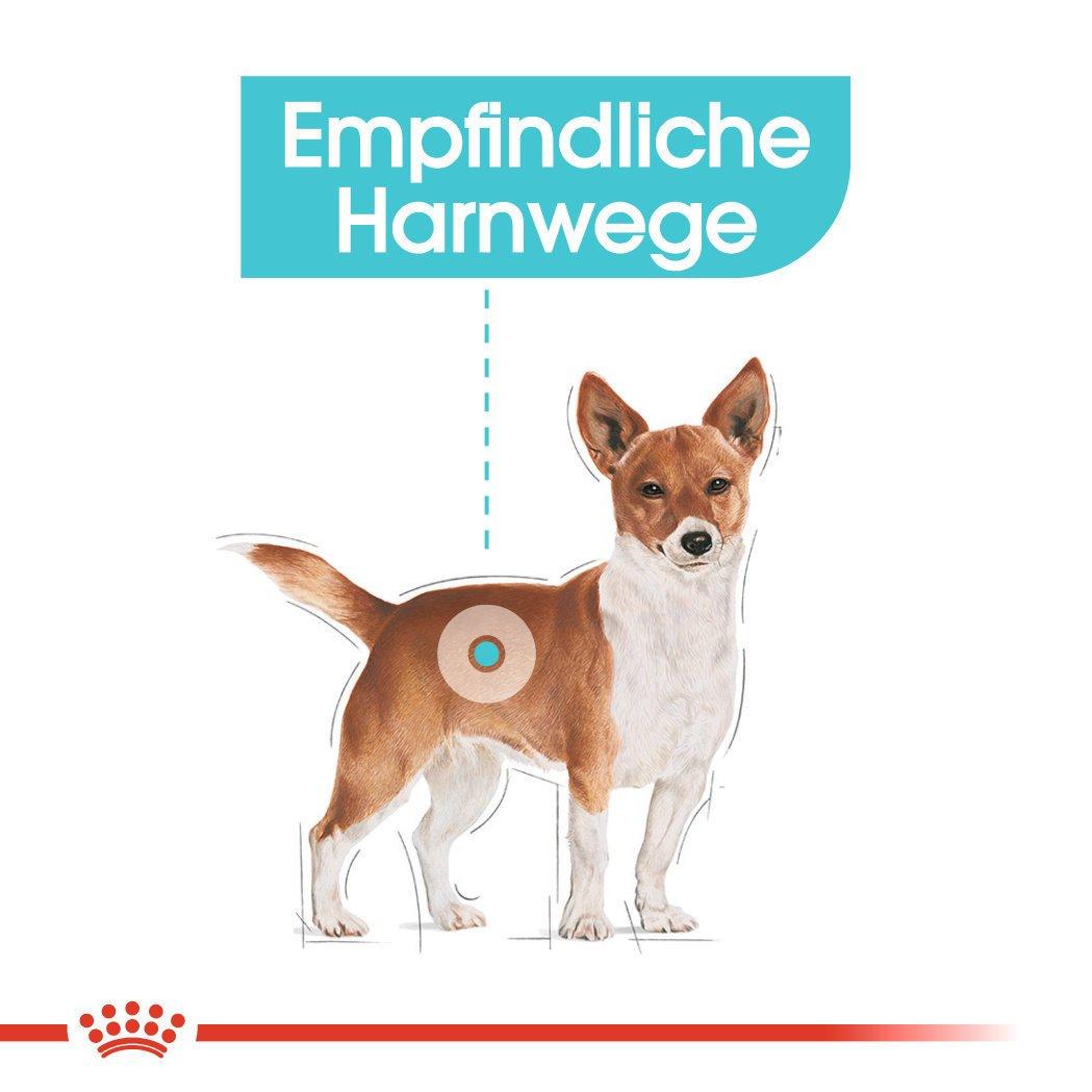 Royal Canin CCN Urinary Care Nassfutter für Hunde, Bild 4