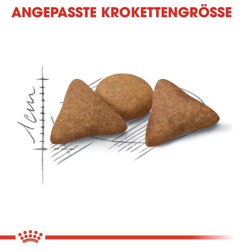 Royal Canin INDOOR Appetite Control Trockenfutter für übergewichtige Wohnungskatzen, Bild 4