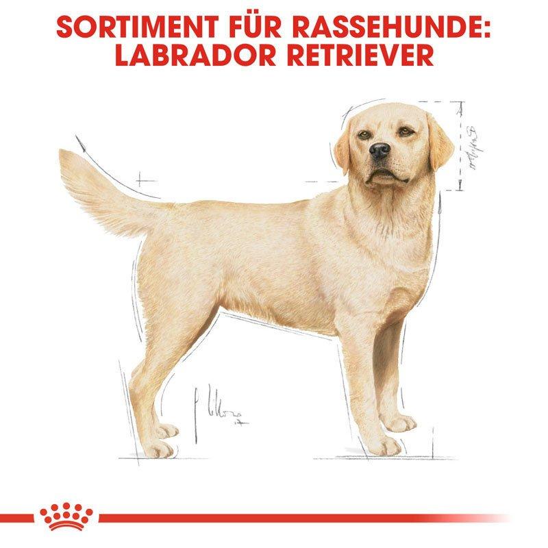 Royal Canin Labrador Retriever Adult Hundefutter trocken, Bild 2