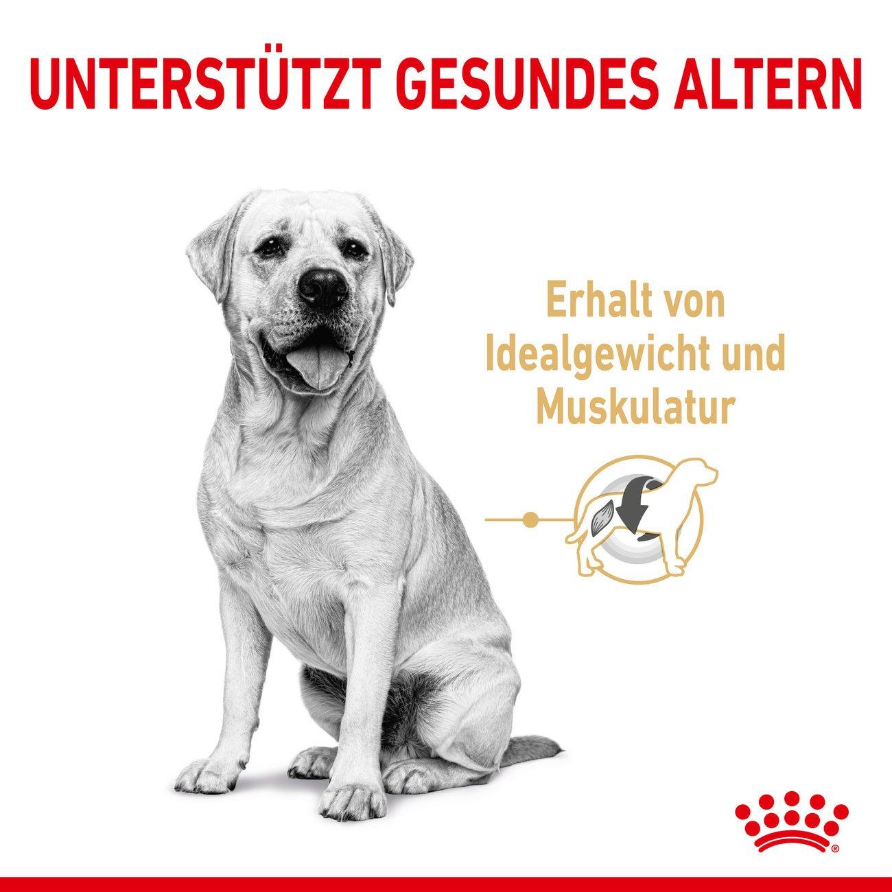 Royal Canin Labrador Retriver Trockenfutter 5+, 3 kg