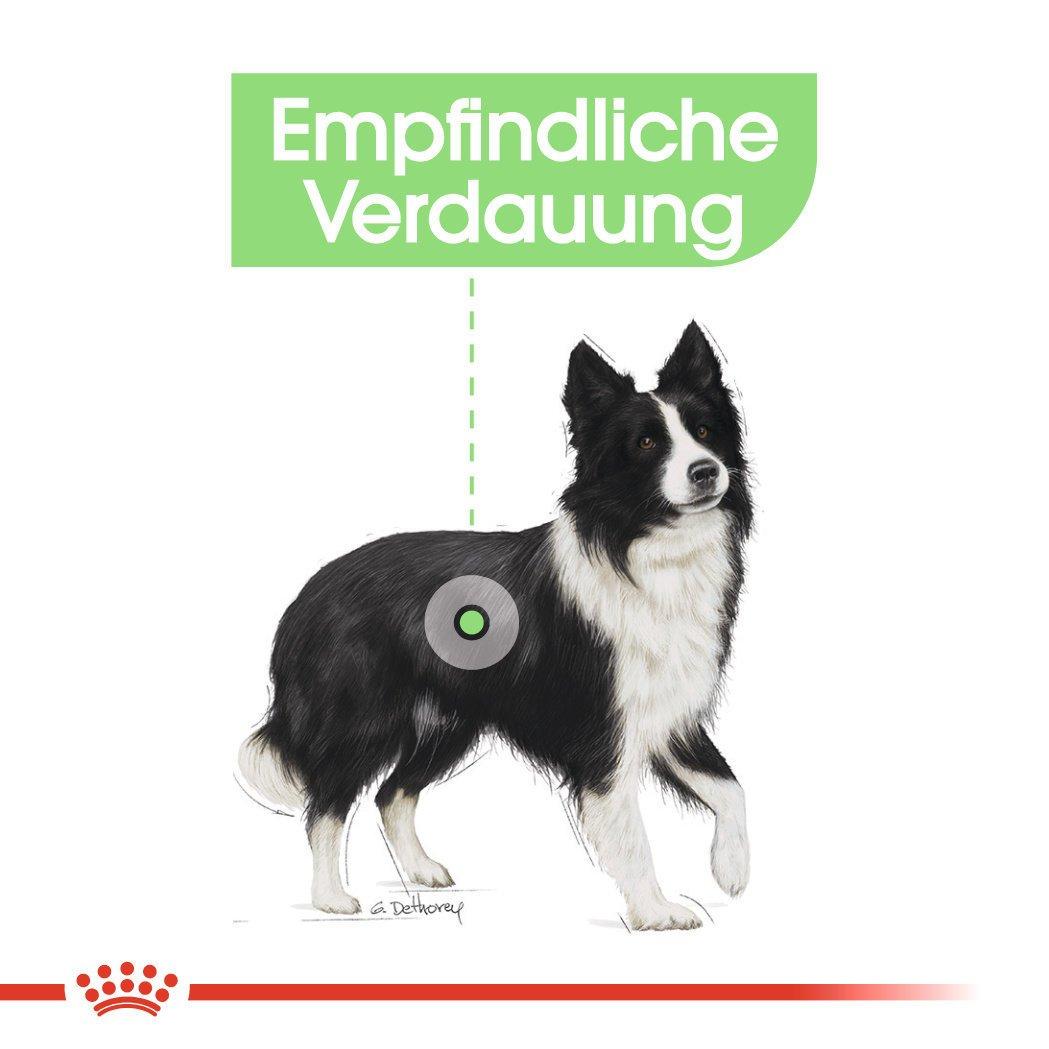 Royal Canin Medium Digestive Care Trockenfutter für mittelgroße Hunde mit emfindlicher Verdauung, Bild 5
