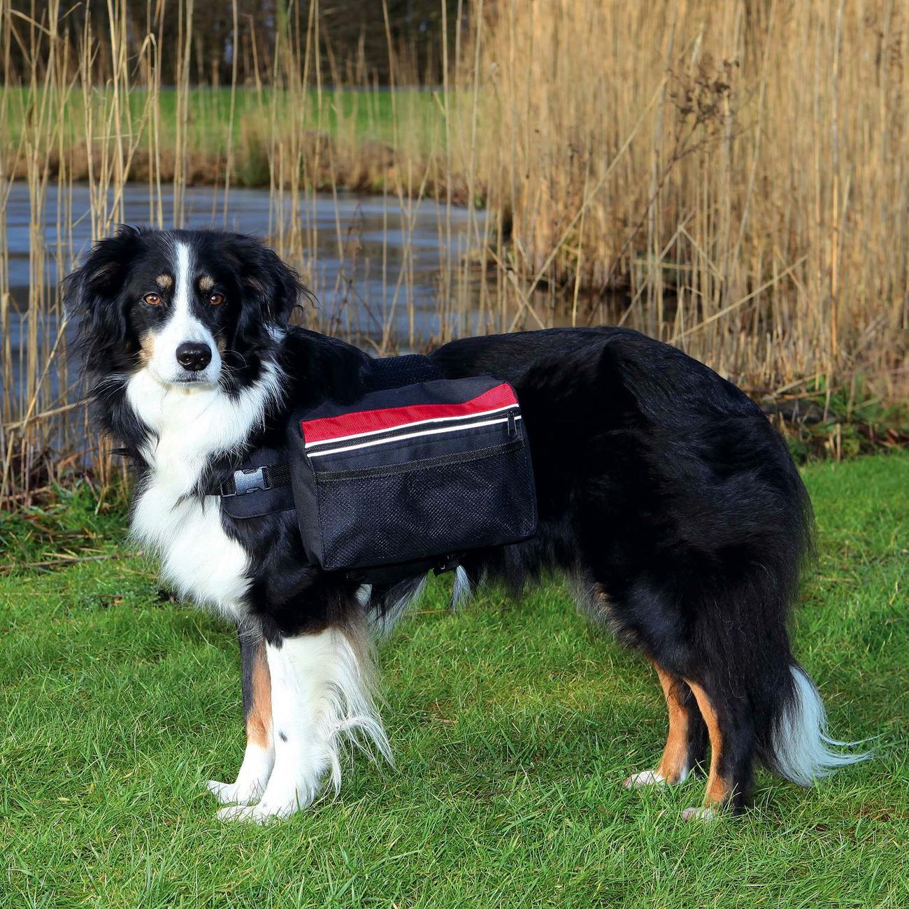 Trixie Rucksack für Hunde, schwarz 30103, Bild 2