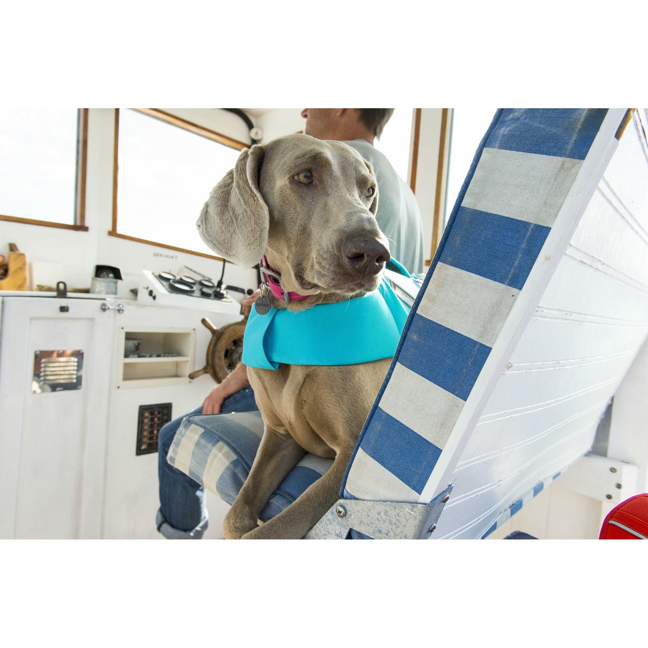Ruffwear Float Coat Schwimmweste für Hunde, Bild 12