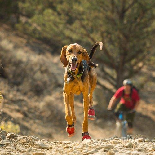 Ruffwear Grip Trex™ Hundeschuhe im 4er Pack, Bild 2