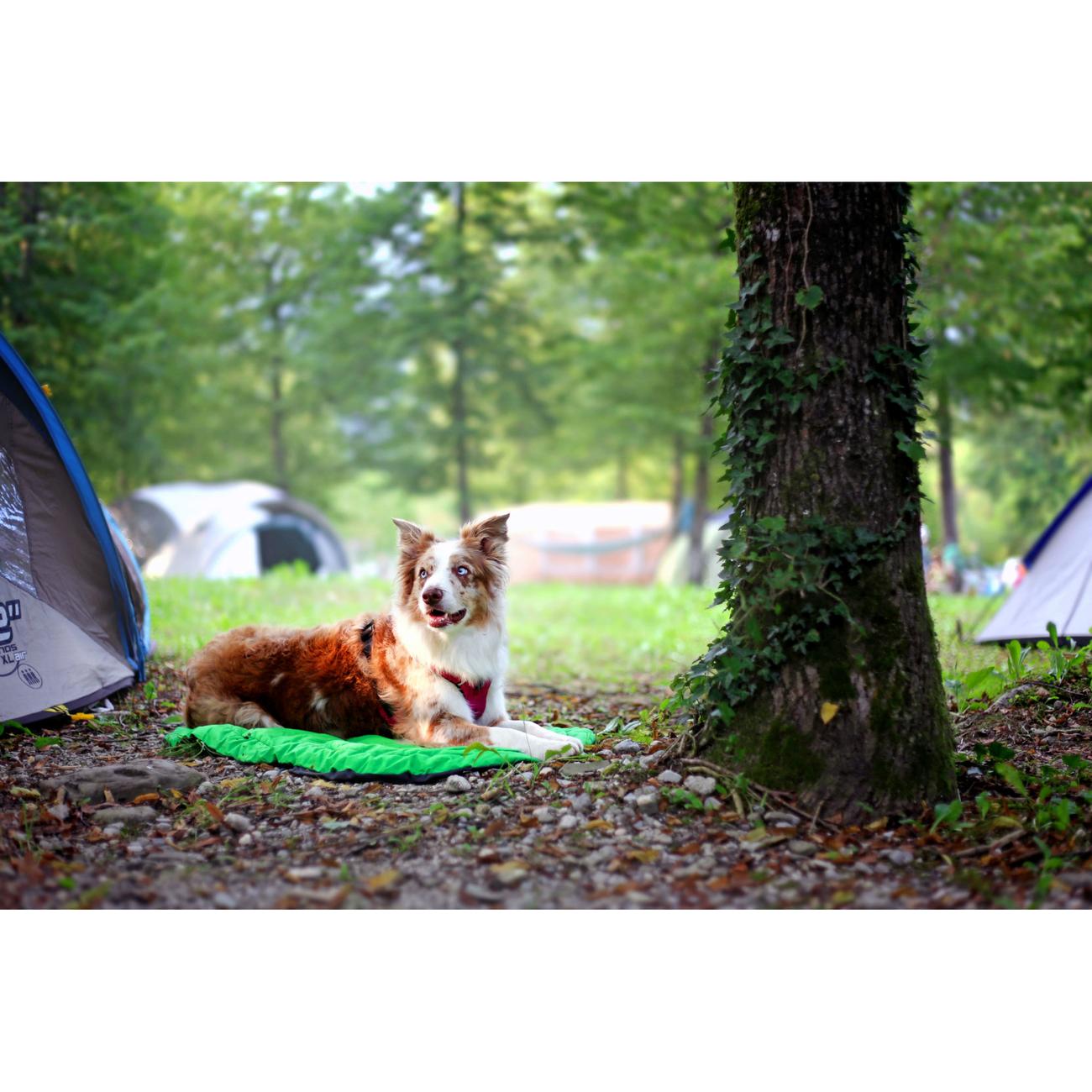 Ruffwear Hundebett Highlands Bed für Outdoor, Bild 9