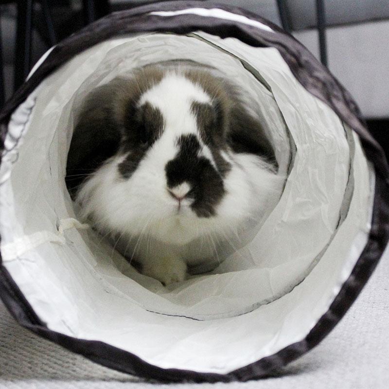 TRIXIE Spieltunnel für Kaninchen, einfach 62792, Bild 3
