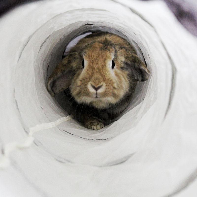 TRIXIE Spieltunnel für Kaninchen, einfach 62792, Bild 4