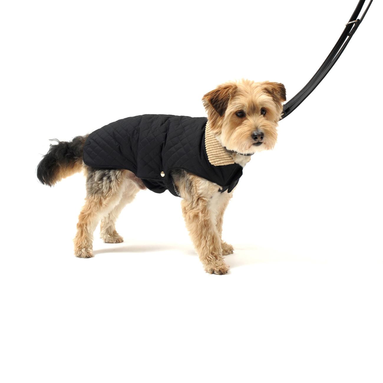 Wolters Steppjacke für Hunde Windsor mit Cordkragen, Bild 4