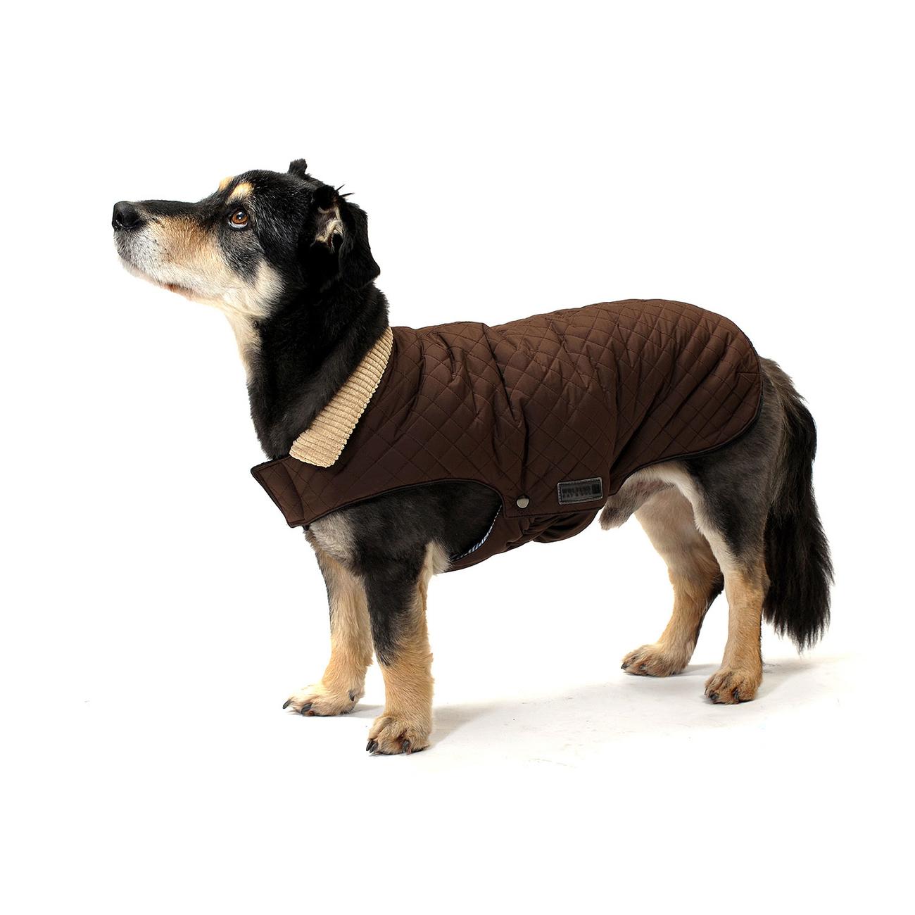 Wolters Steppjacke für Hunde Windsor mit Cordkragen, Bild 3
