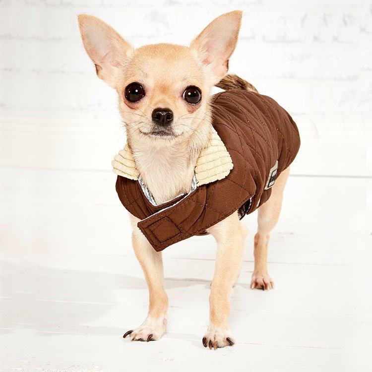 Wolters Steppjacke für Hunde Windsor mit Cordkragen, Bild 2