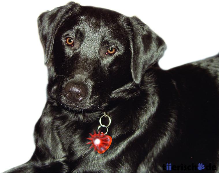 Karlie Super Blinki für Hunde in Herzform