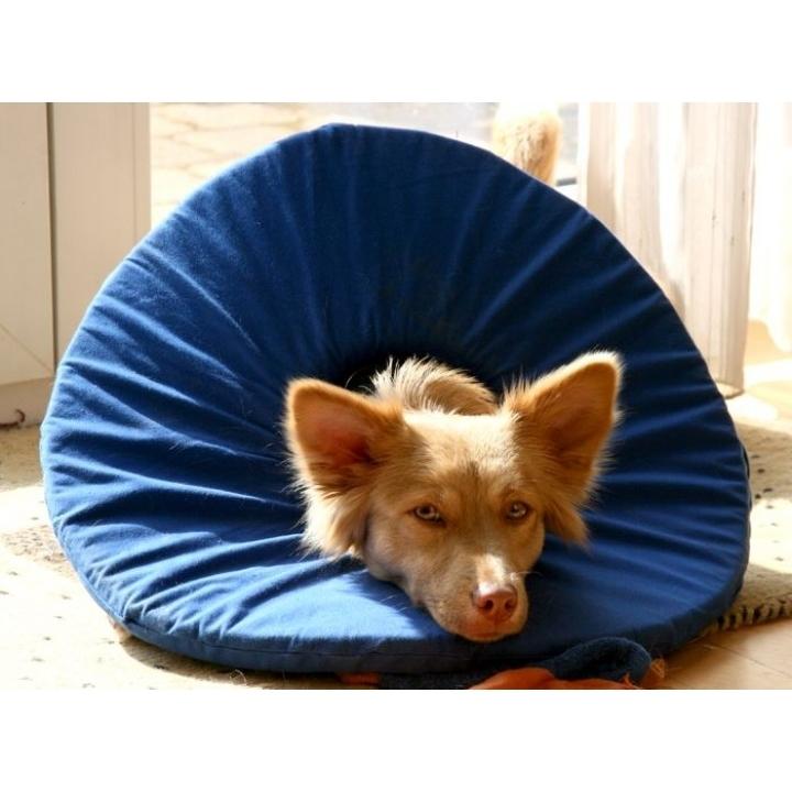 TEPAW Schutzkragen Leckschutz für Hunde, Bild 3