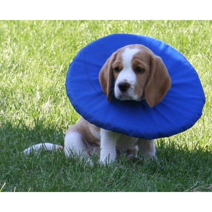 TEPAW Schutzkragen Leckschutz für Hunde, Bild 6