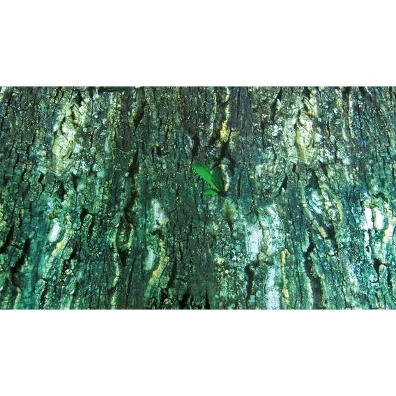 Trixie Terrarien-Rückwand Regenwald, beidseitig,Regenwald/Baumrinde, 60 × 150 cm