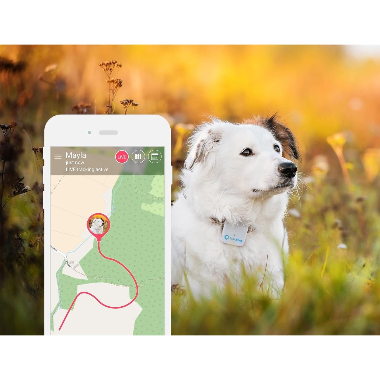 Tractive GPS Tracker für Haustiere, Bild 3