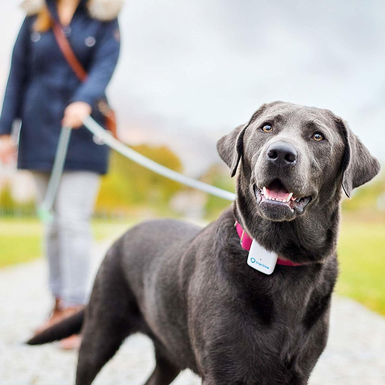 Tractive GPS Tracker für Haustiere, Bild 6