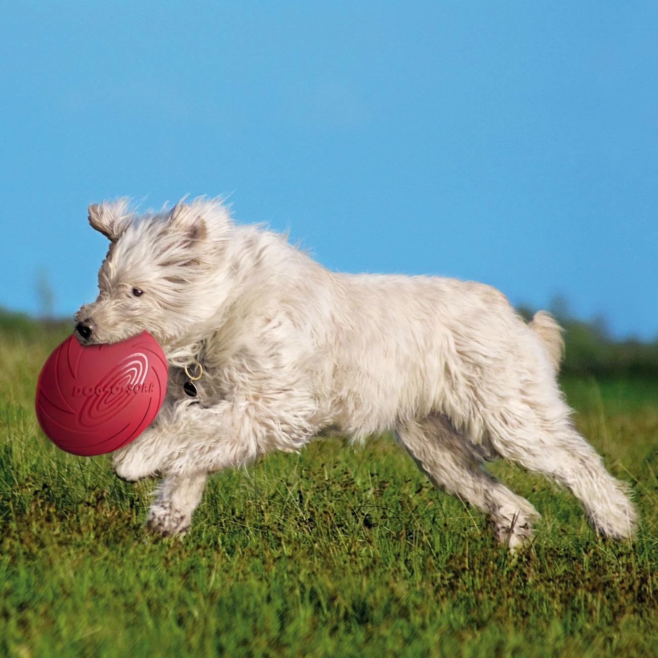 Trixie Dog Disc Hundefrisbee aus Gummi 33500, Bild 5