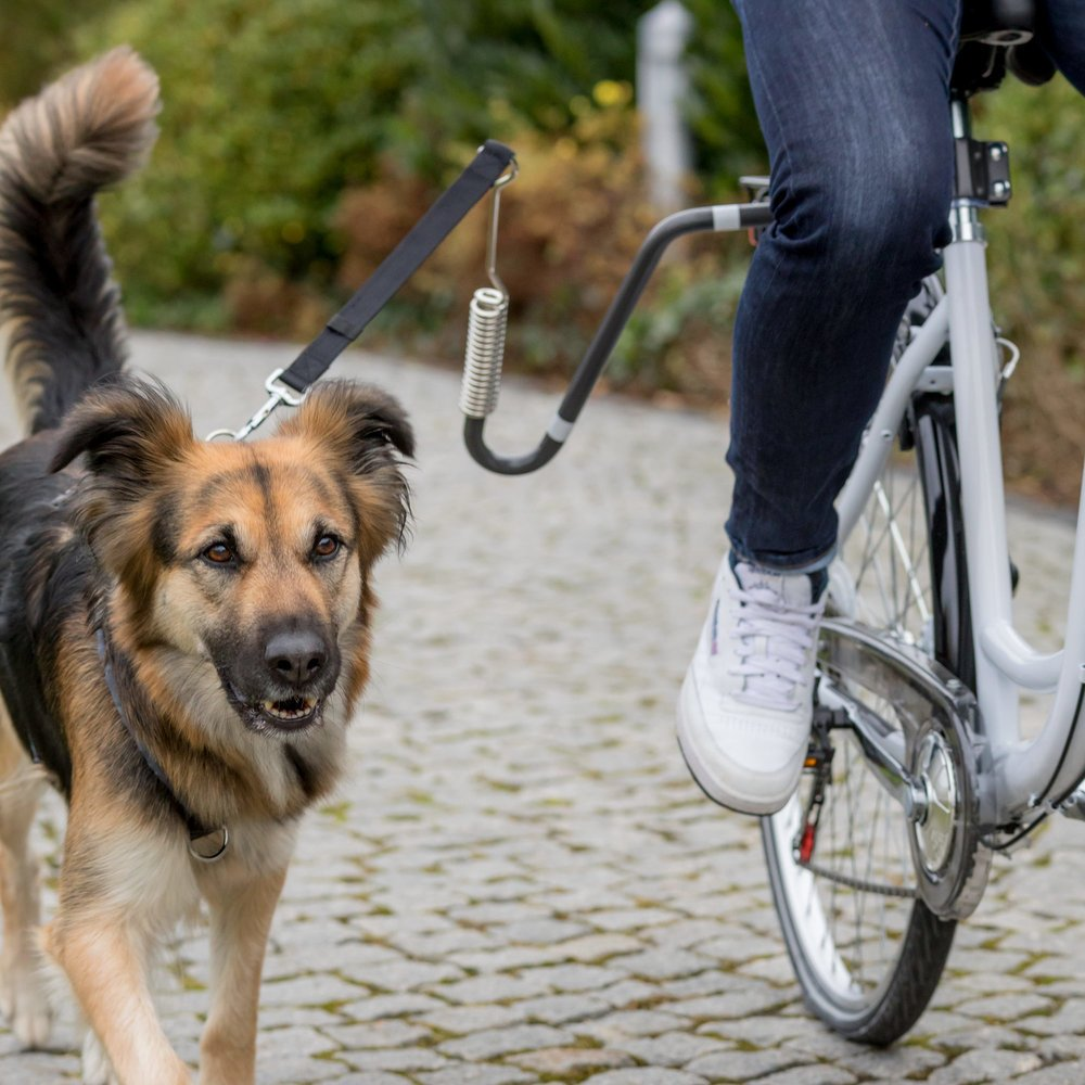 Fahrrad Set mit Leine Bild 2