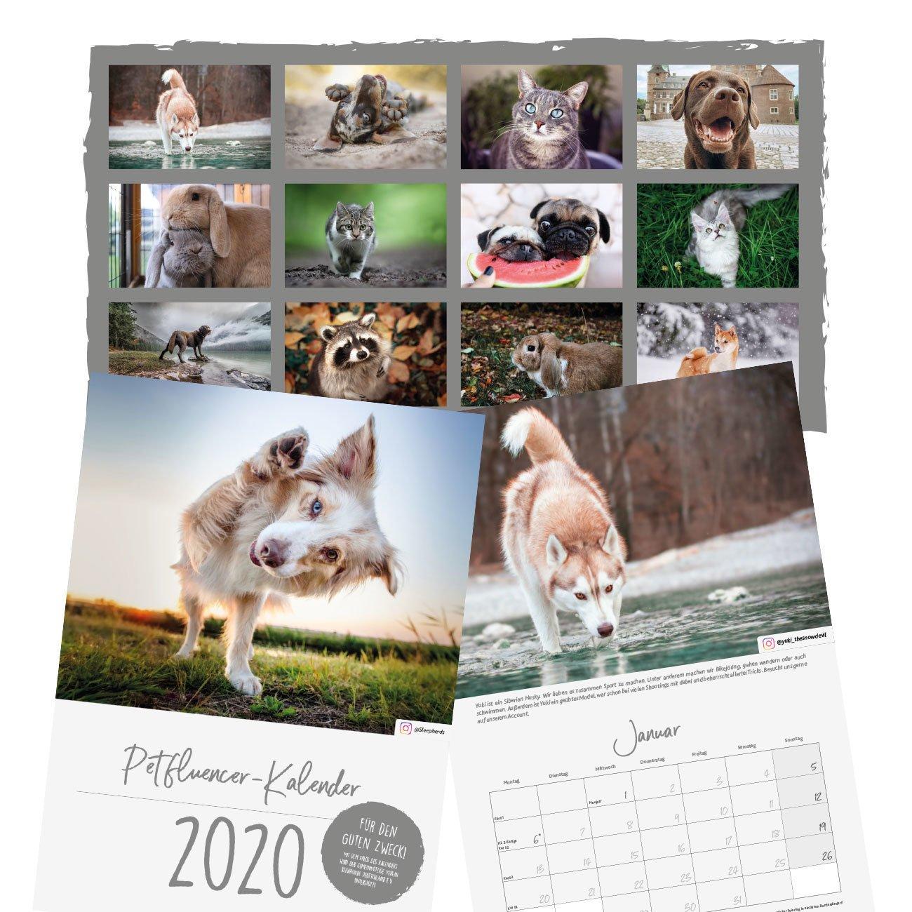 Trixie Petfluencer Kalender 2020, Bild 2