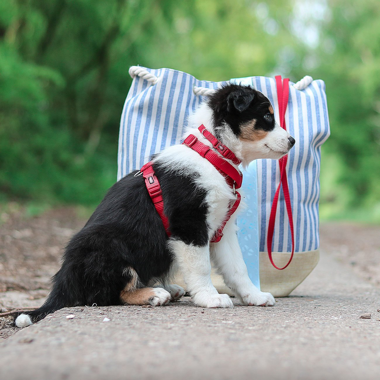 TRIXIE Premium Nylon Hundegeschirr 204801, Bild 12
