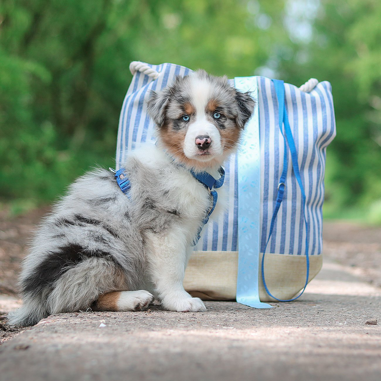 TRIXIE Premium Nylon Hundegeschirr 204801, Bild 14