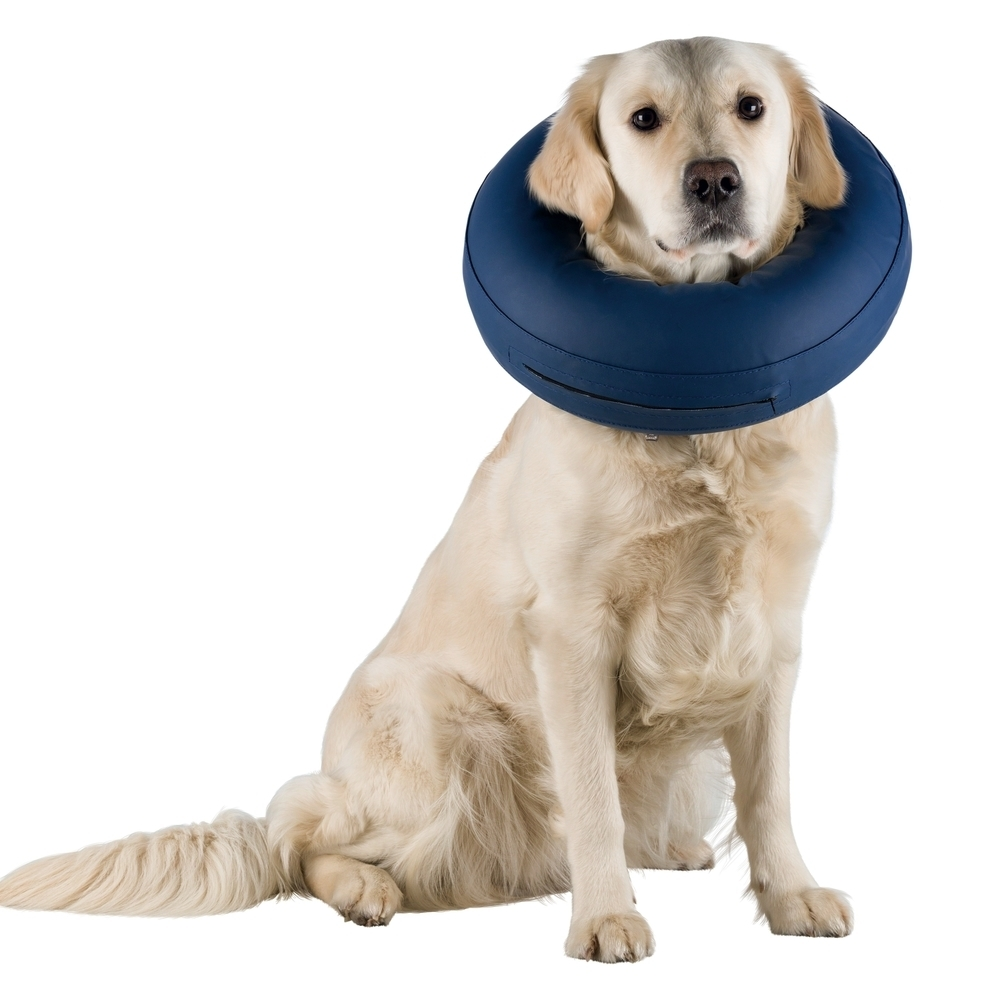 Trixie Schutzkragen für Hunde aufblasbar 19540