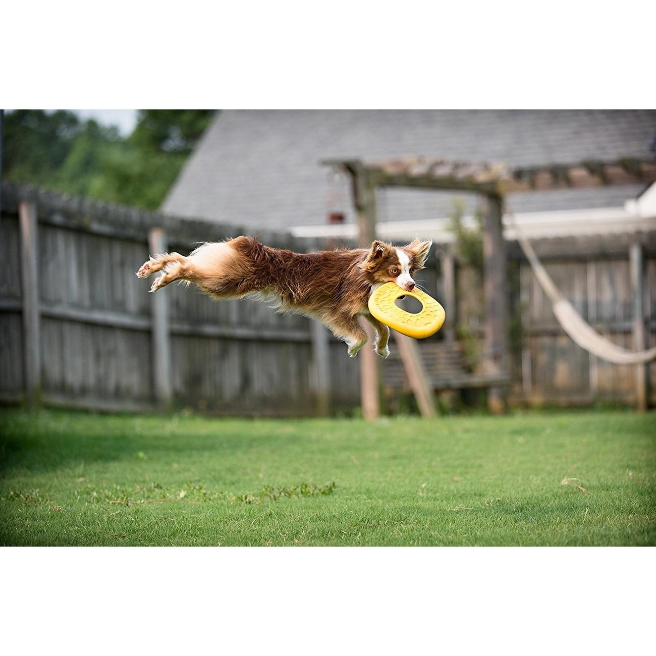 West Paw Air Dash für Hunde, Bild 14