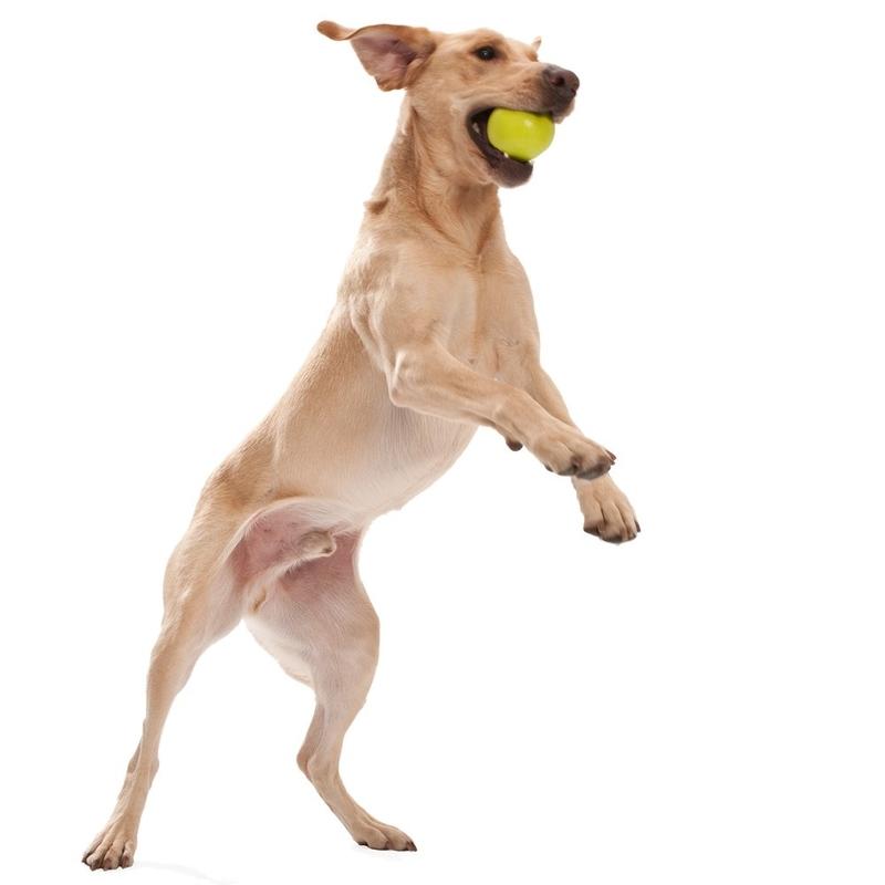 West Paw Jive Hundespielzeug, Bild 2