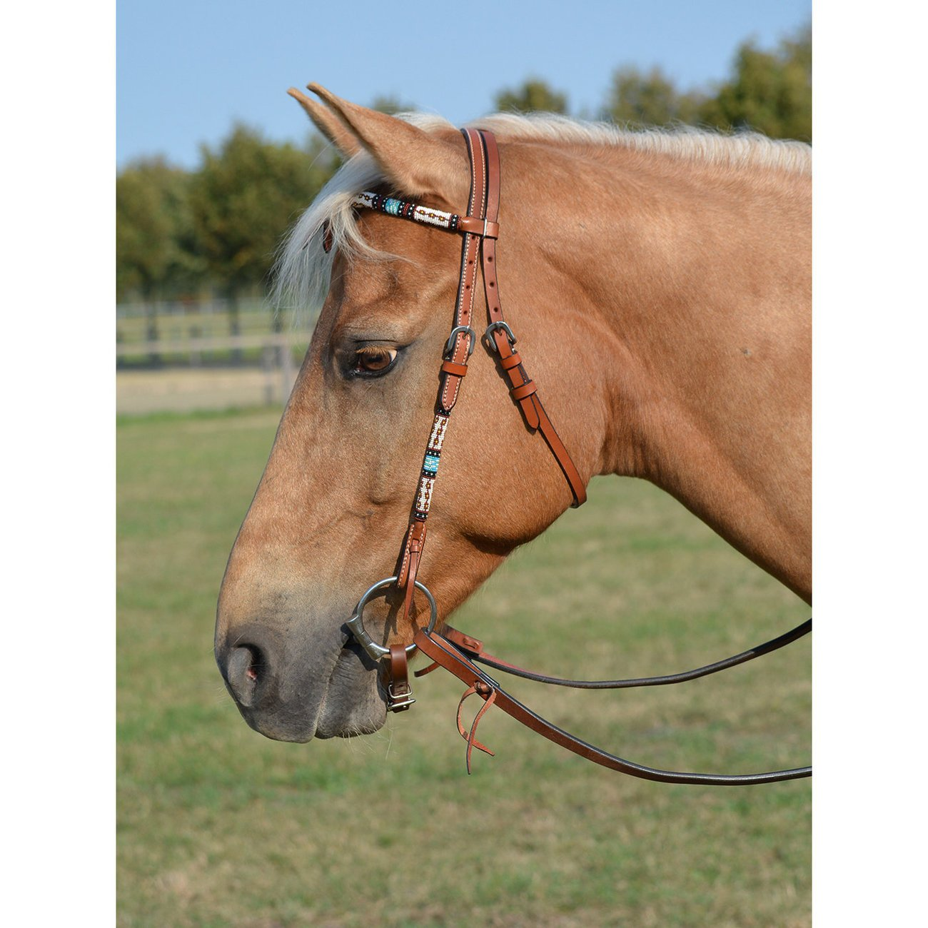 WILDHORN Kopfstück Dakota, Gr. Pony