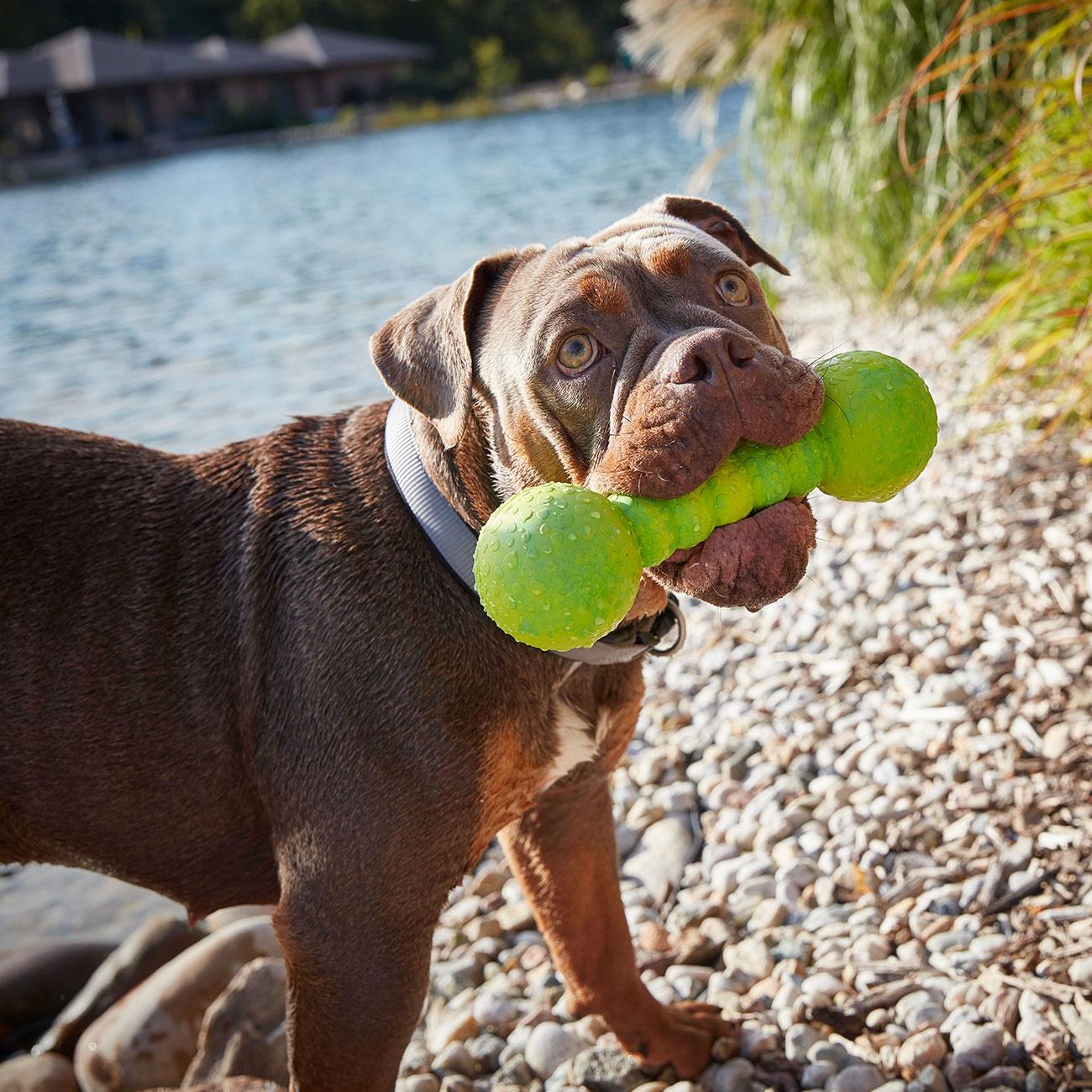 Wolters Aqua-Fun Gym Hundespielzeug, Bild 2