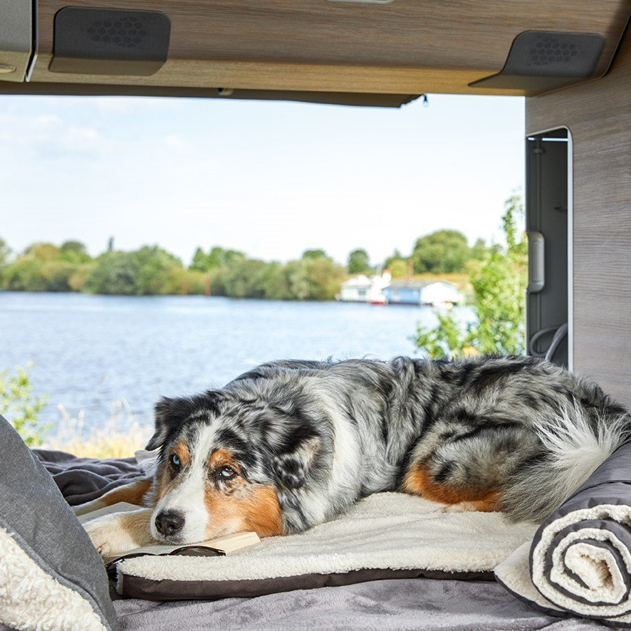 Surplus Hunde Reisedecke Vagabund, Bild 2