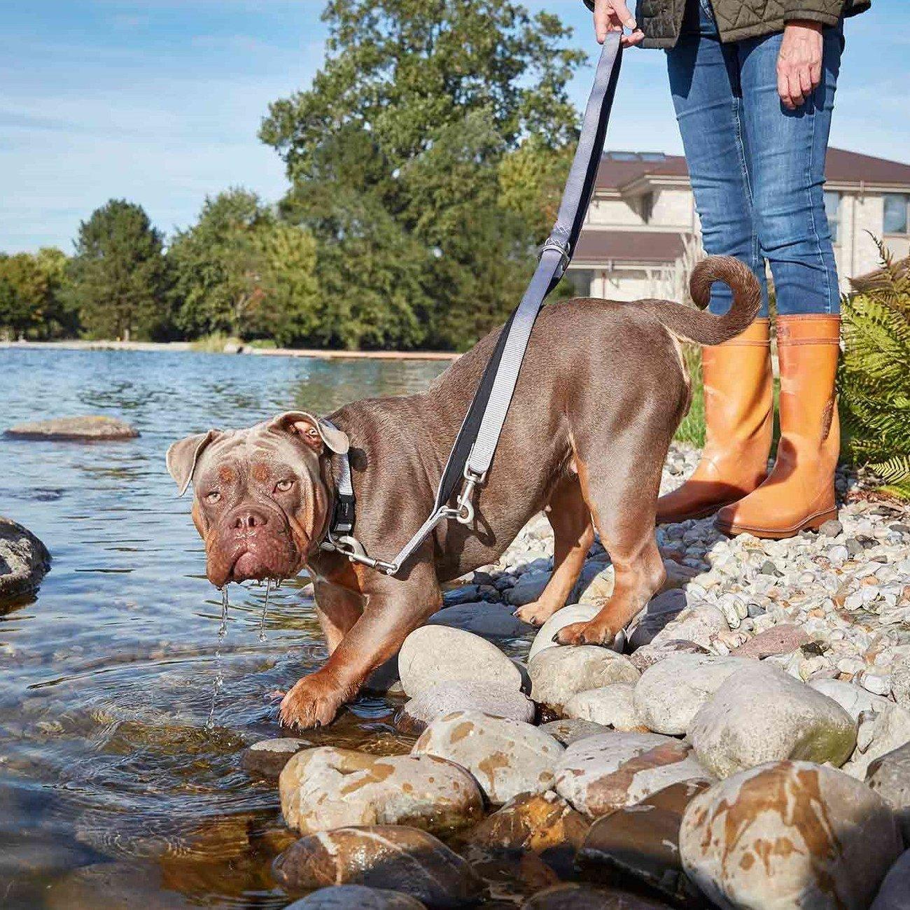 Wolters Hundeleine Professional Comfort Bild 2
