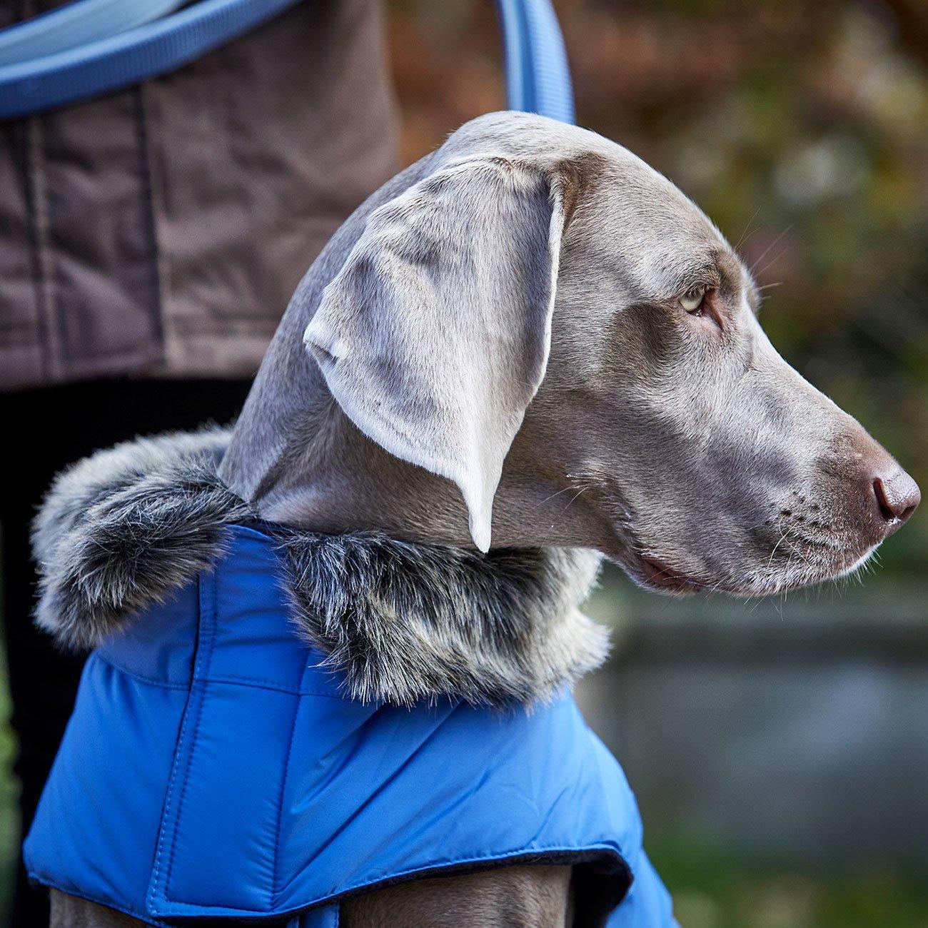 Wolters Hundeparka mit Fellkragen, Bild 3