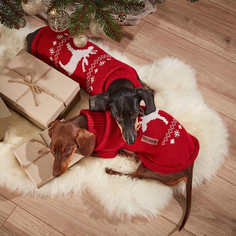 Wolters Strickpullover für Hunde mit Elch Motiv, Bild 3