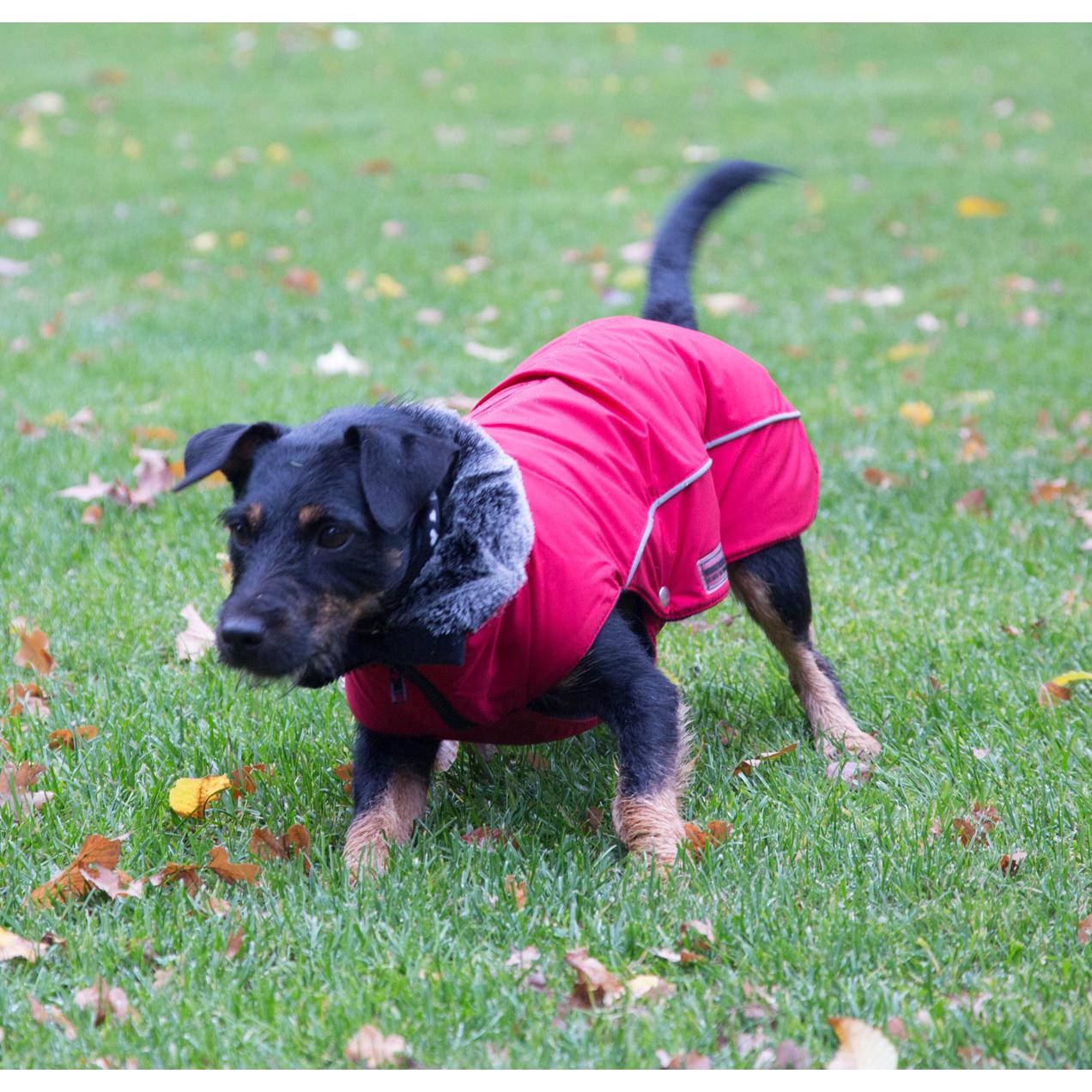 Wolters Winterjacke für Hunde Amundsen, Bild 2