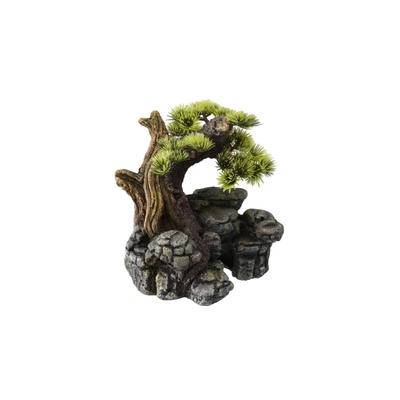 Aqua Della Bonsai auf Stein