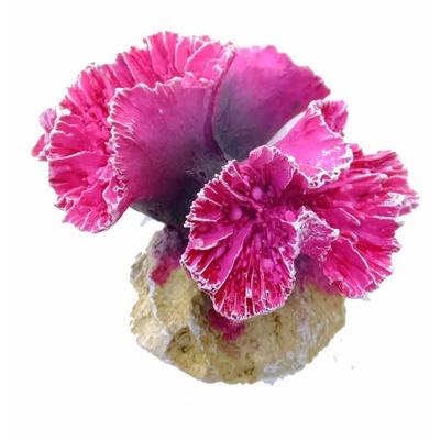 Aqua Della Coral Korallenriff Modul Symphylia Coral